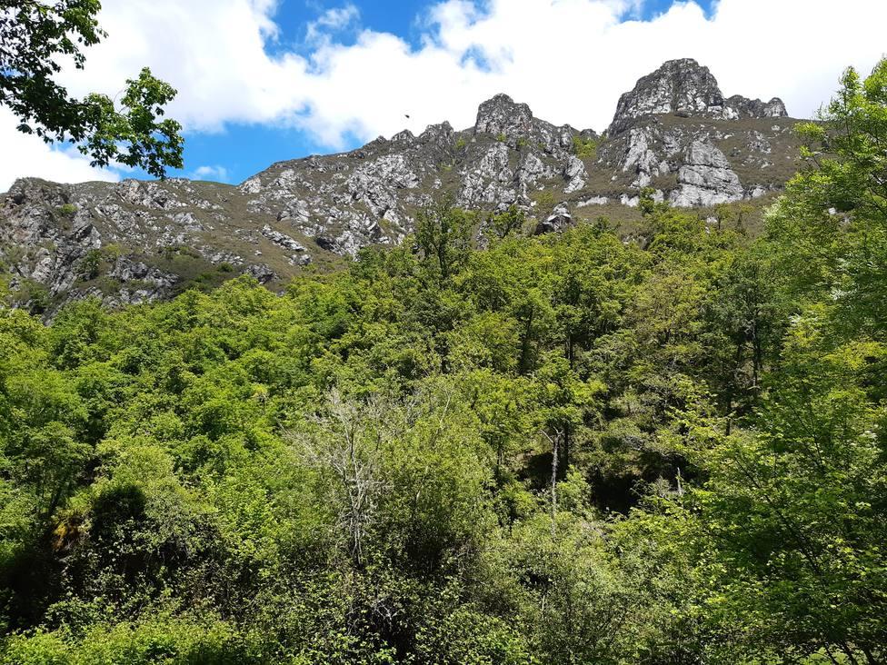 La vegetación de la zona es espectacular con bosques de robles y hayas