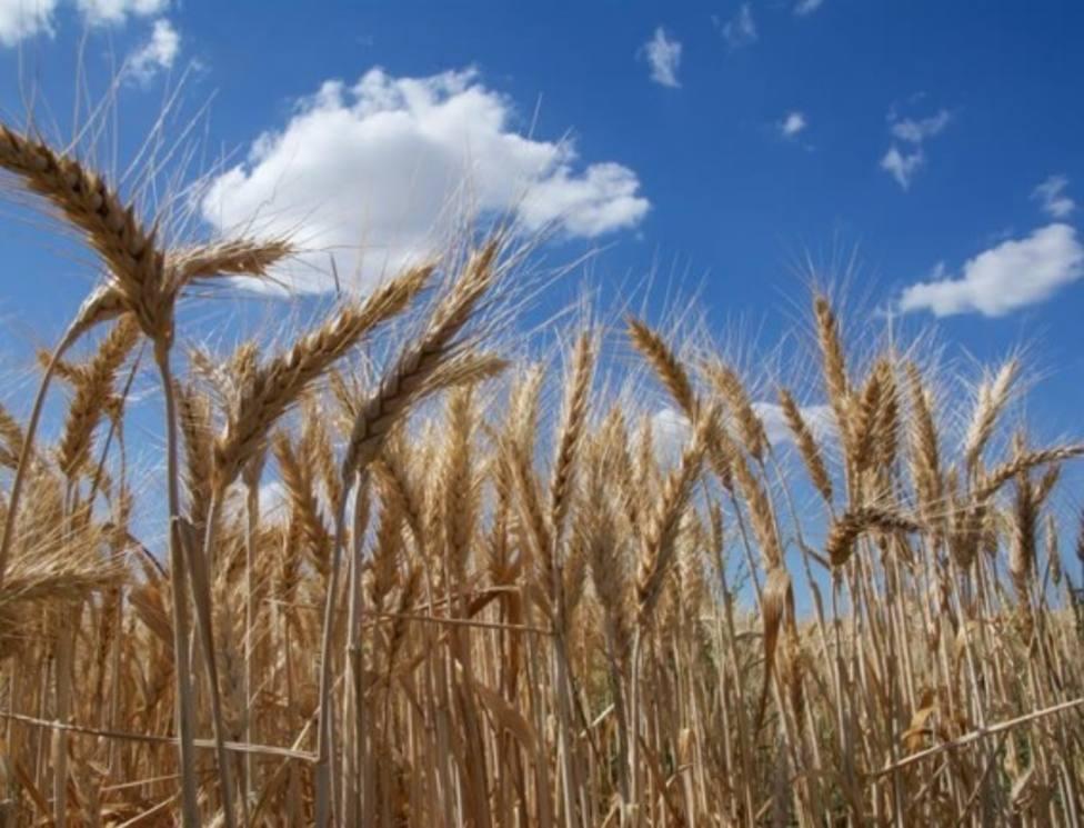 Desarrollan nuevas estrategias para evaluar el riesgo de nuevas proteínas alimentarias de producir alergias
