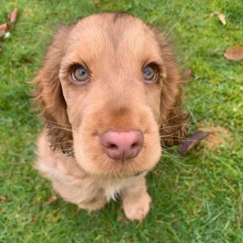 El perrito que abrió los ojos por primera vez, entre lo más leído de la semana en COPE.es