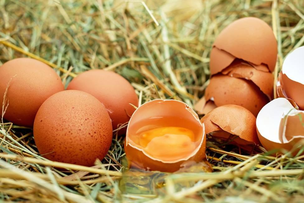 ctv-gvz-huevos-y-sus-cascaras-pixabay