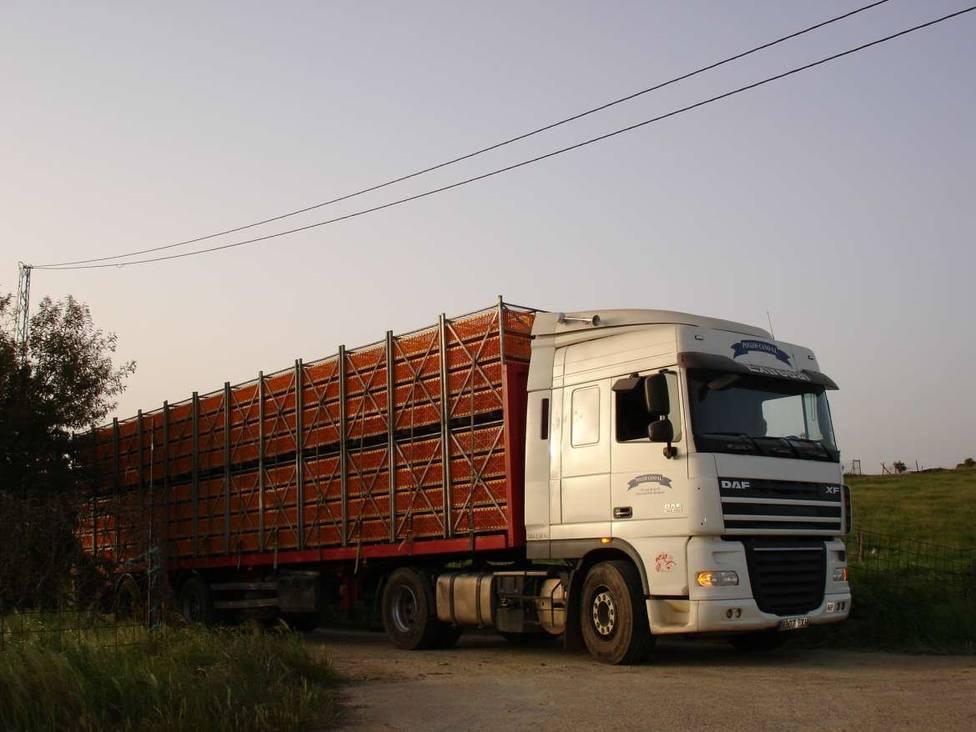 El Gobierno flexibiliza el transporte de animales para garantizar el suministro