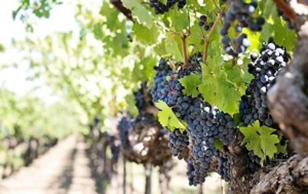 Comienzan en Ponferrada las clases del Máster en Viticultura y Enología de la ULE