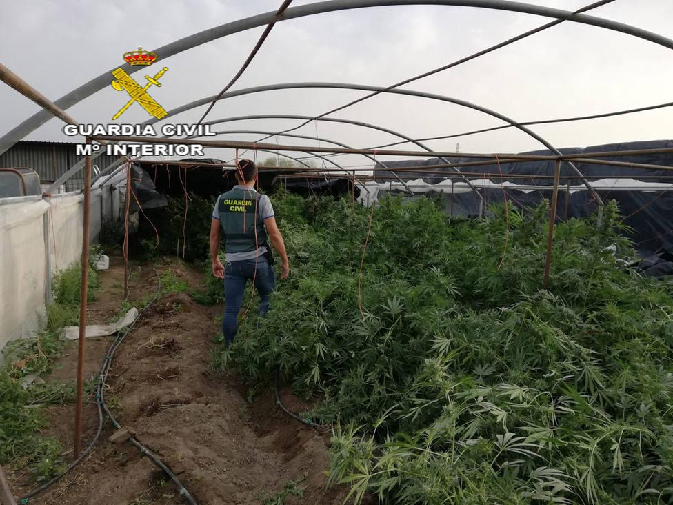 Detenciones en Lebrija por cultivo de marihuana