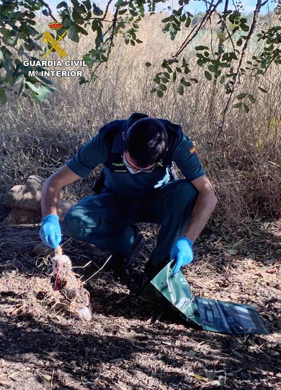 Sucesos.- La Guardia Civil investiga a cuatro personas por utilizar presuntamente cebos envenenados en fincas agrícolas