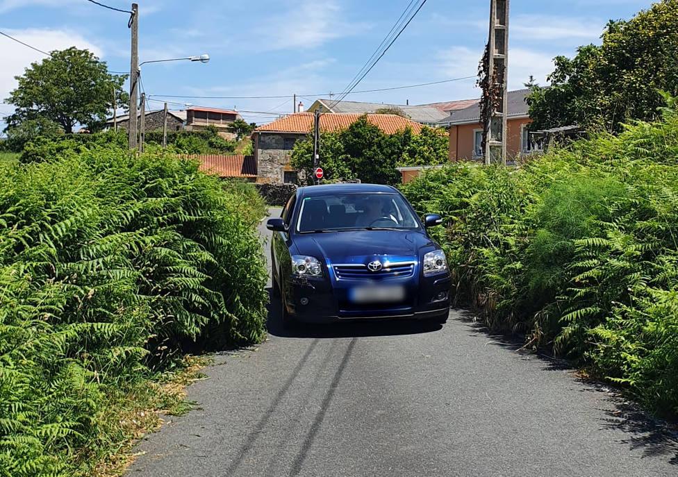 El algunas zonas la vegetación invade casi toda la carretera - FOTO: Cedida