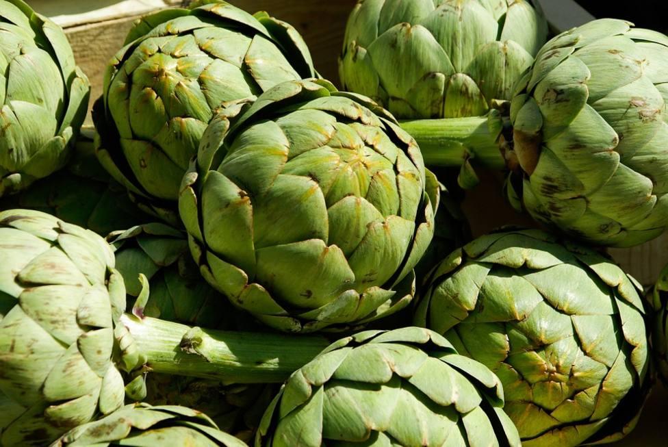 Murcia produce la tercera parte de la cosecha nacional de alcachofas