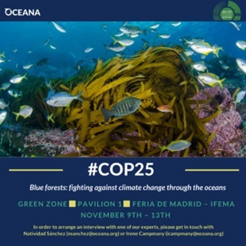 Oceana pide un plan de acción para la protección de los bosques azules