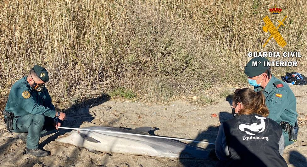 Aparece un delfín varado en Mojácar