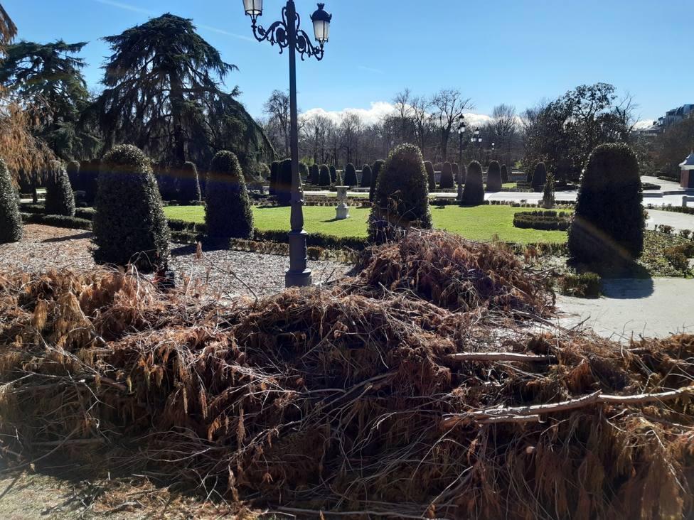 Filomena acaba con mil de los diecisiete mil árboles del Retiro