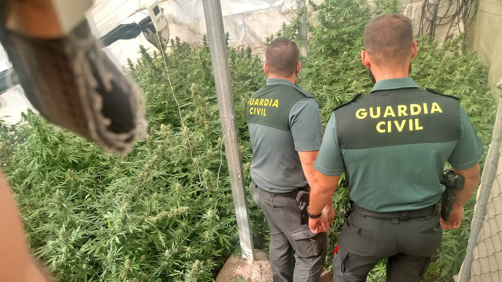 Diez nuevas operaciones contra el cultivo de cannabis, con 14 detenidos en la provincia de Granada