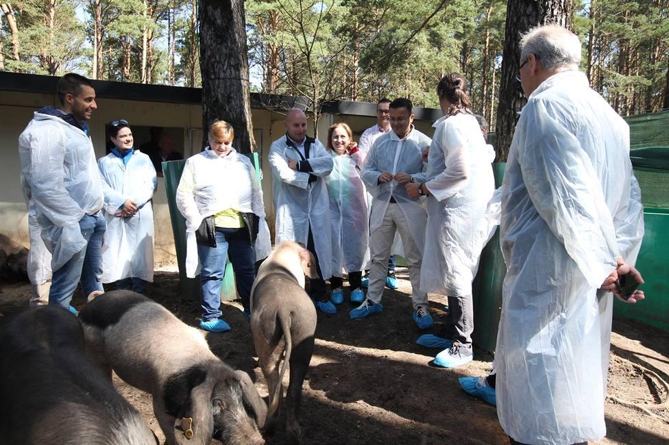 El conselleiro de Medio Rural, José González, visita una explotación de porcino en Friol