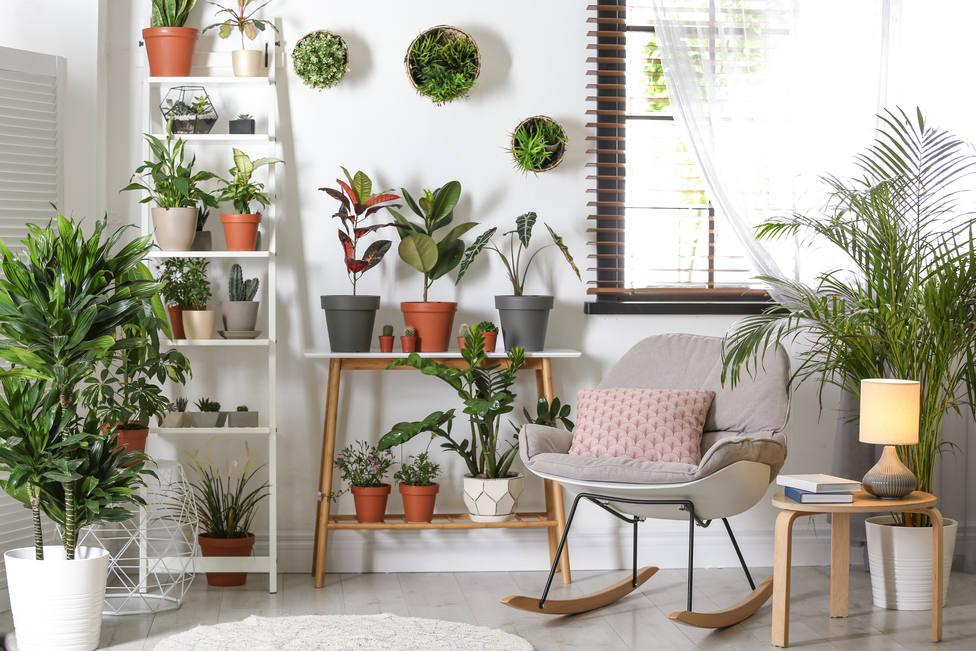Cómo cuidar tus plantas este verano si te vas de vacaciones