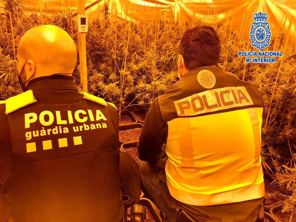 Sucesos.- Desmantelado un cultivo con más de 2.400 plantas de marihuana en Vic (Barcelona)