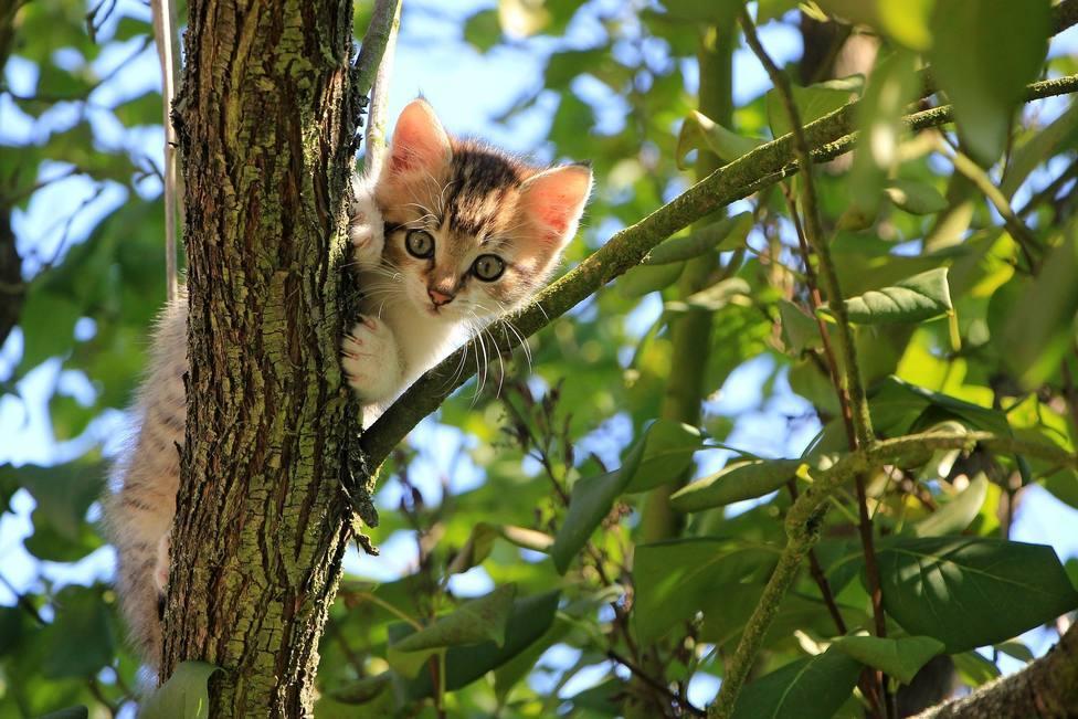 Gatito callejero subido a la rama de un árbol