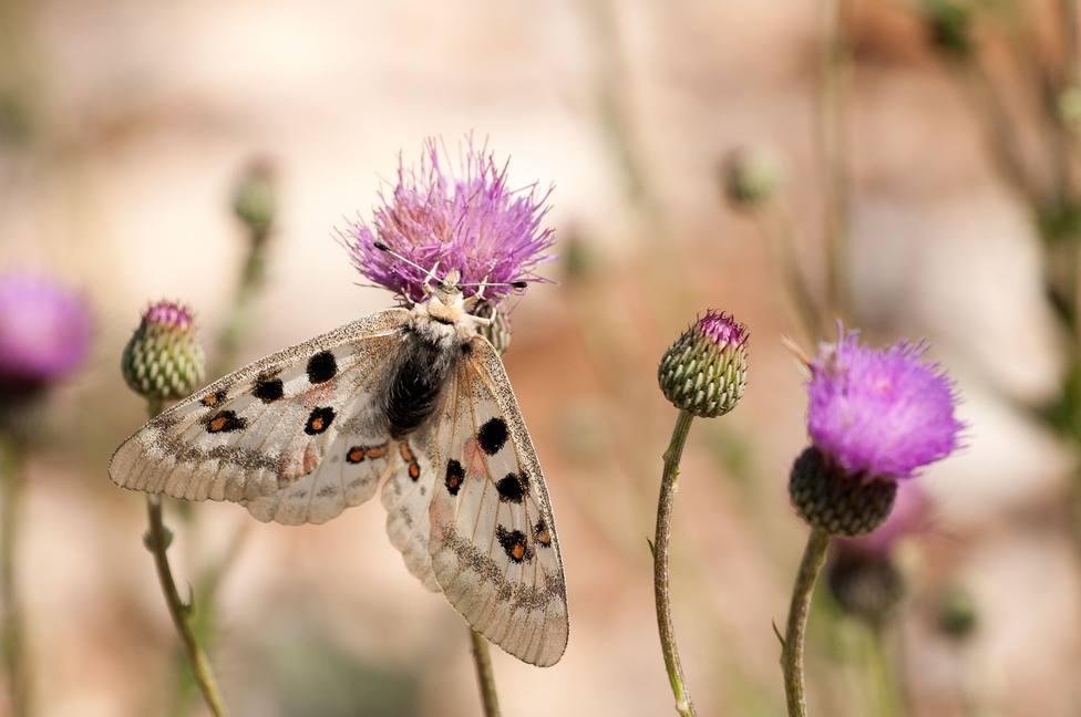 Los márgenes florares aumentan en un 130% las poblaciones de insectos en entornos agrícolas, según un estudio