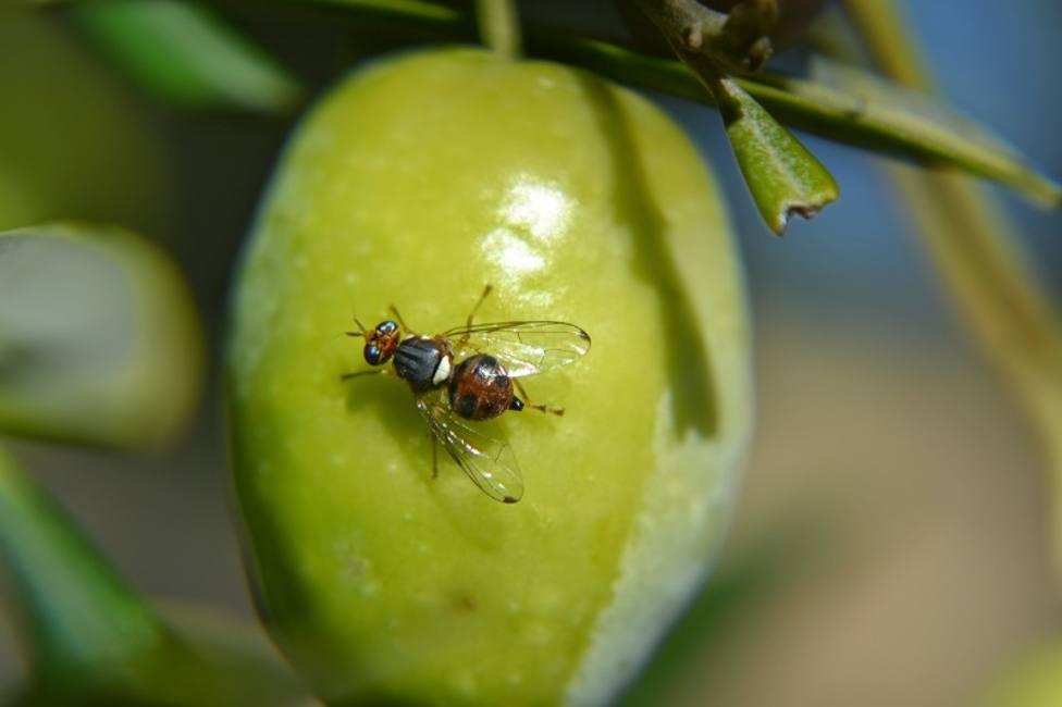 ctv-3x5-mosca-sobre-fruto