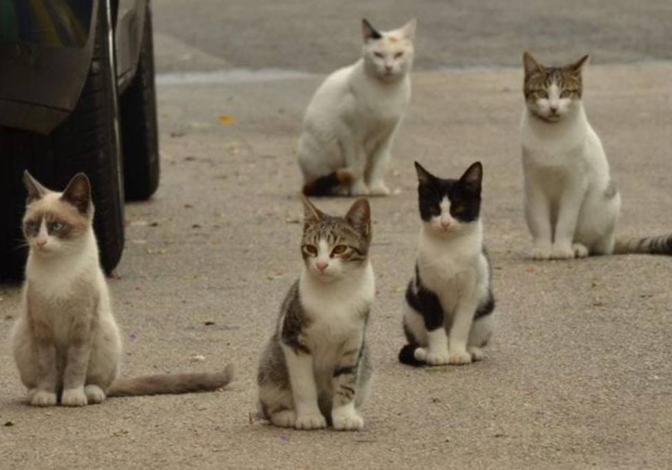 El Ayuntamiento de Barruelo de Santullán sancionará a quien de de comer a perros y gatos en la vía pública