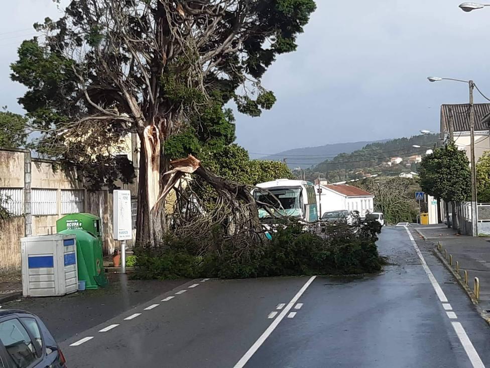 Una gran rama cortó un carril en la AC-133, en Maniños, Fene - FOTO: Tráfico Ferrolterra