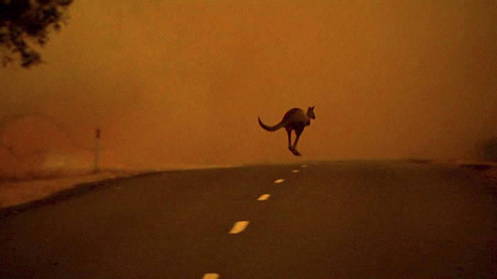 Las terribles imágenes de los animales afectados por los incendios en Australia