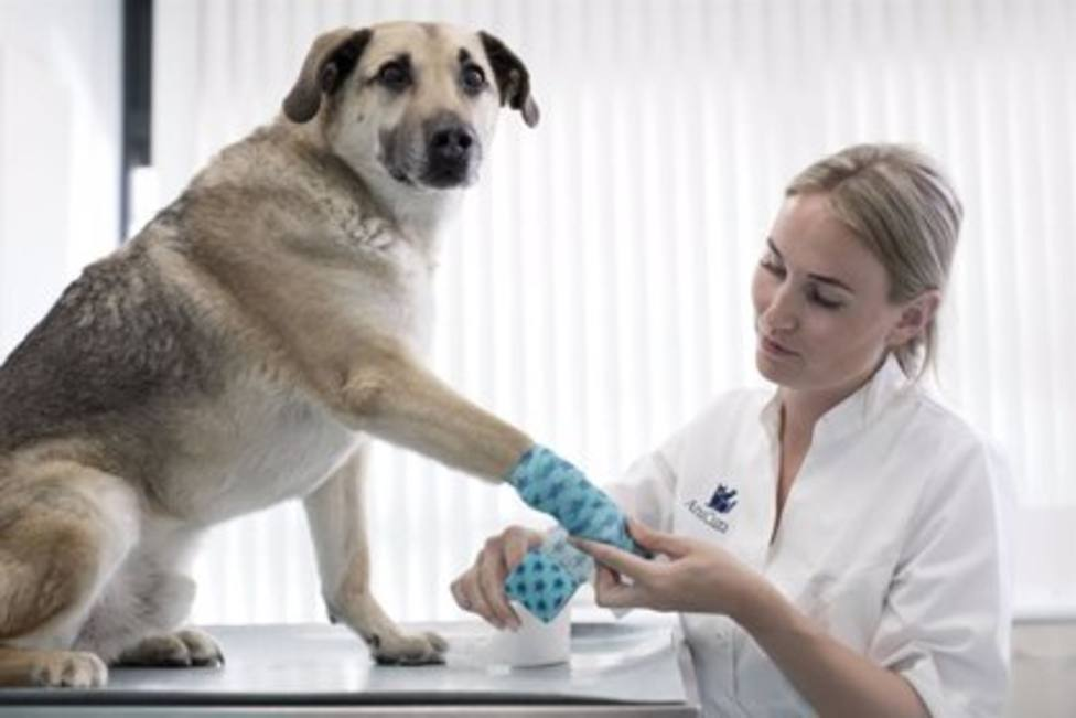 ctv-9th-veterinarios