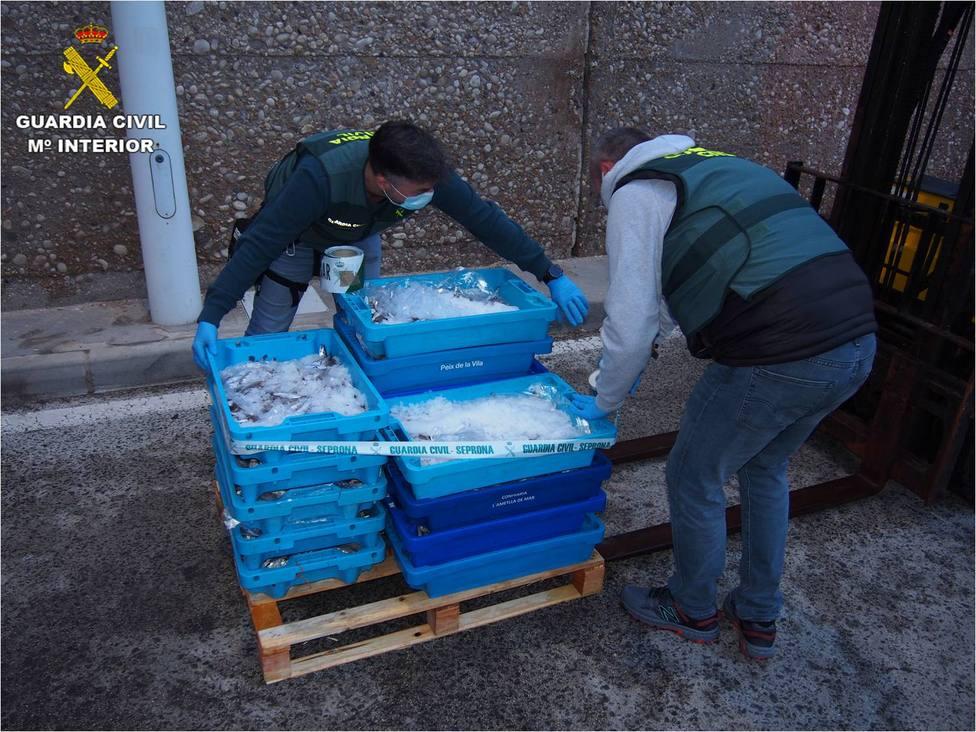 La Guardia Civil interviene en Altea 110 kilos de merluza inmadura que iba a ser vendida en Madrid