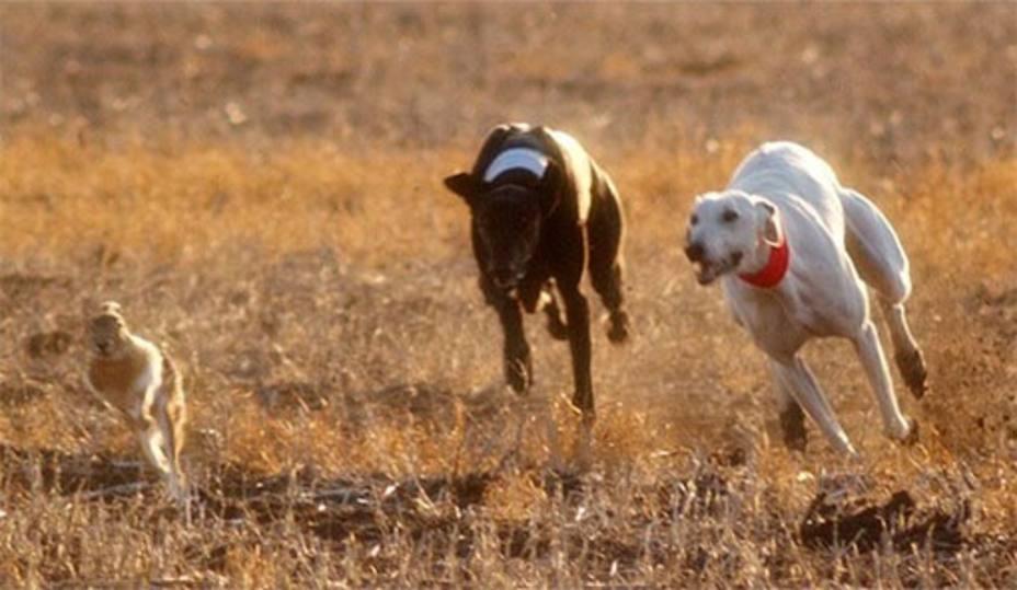 Parlamentarios animalistas acusan al Gobierno de promover la caza alegando que genera riqueza y conserva la naturaleza
