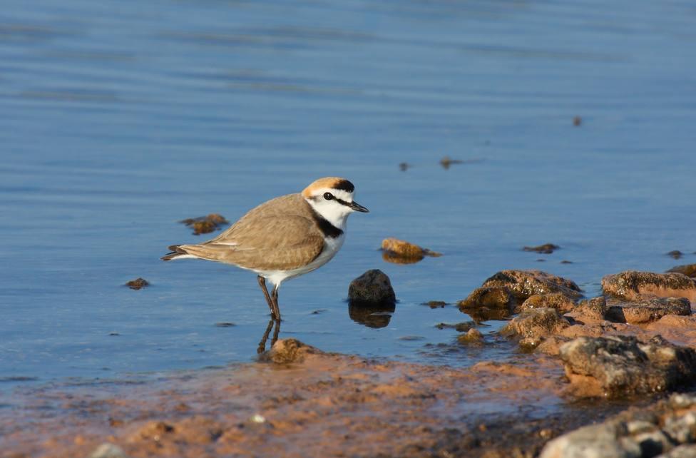 Un total de 622 especies componen la nueva Lista de las aves de España de SEO/BirdLife