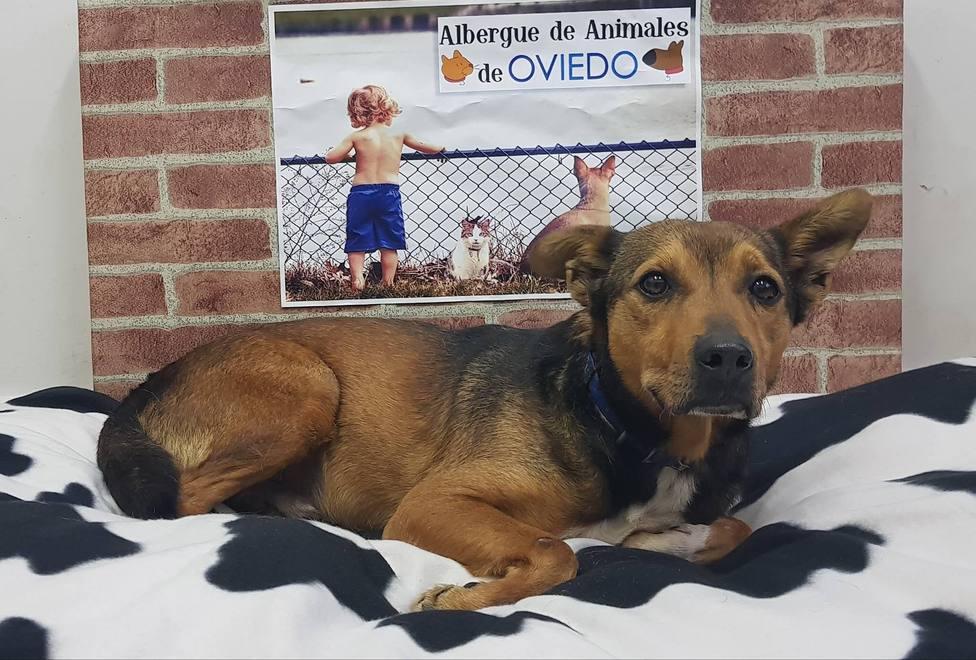 La Bolgachina pide que personas con perro acojan a las mascotas de los infectados