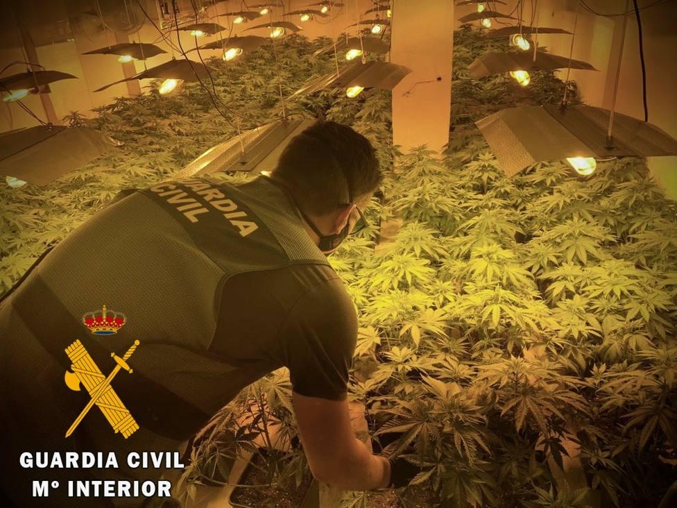 Detenido en Roquetas de Mar por utilizar una vivienda alquilada para cultivar marihuana