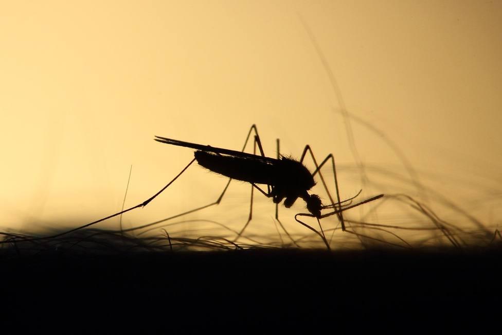 Distintas plagas de mosquitos se extienden por la provincia de Córdoba