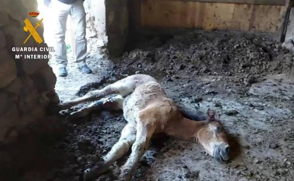 Investigado un hombre por la muerte de una potra en La Rioja: herida y desnutrida tuvo que ser sacrificada