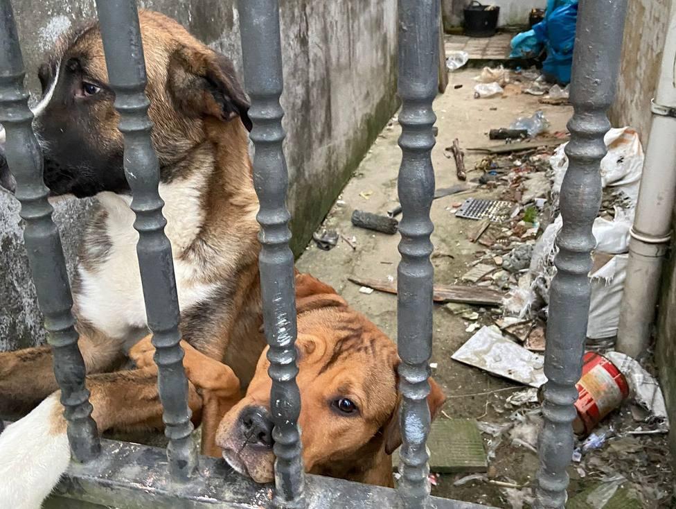 Los perros situados en la zona de Catabois, en Ferrol - FOTO: LIbera