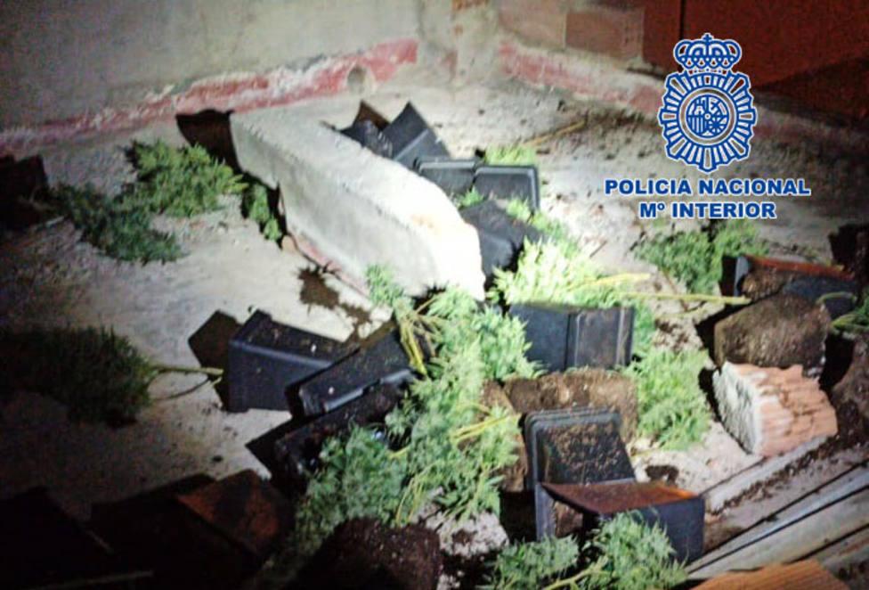 Detenido en Almería cuando lanzaba plantas marihuana a la terraza del vecino