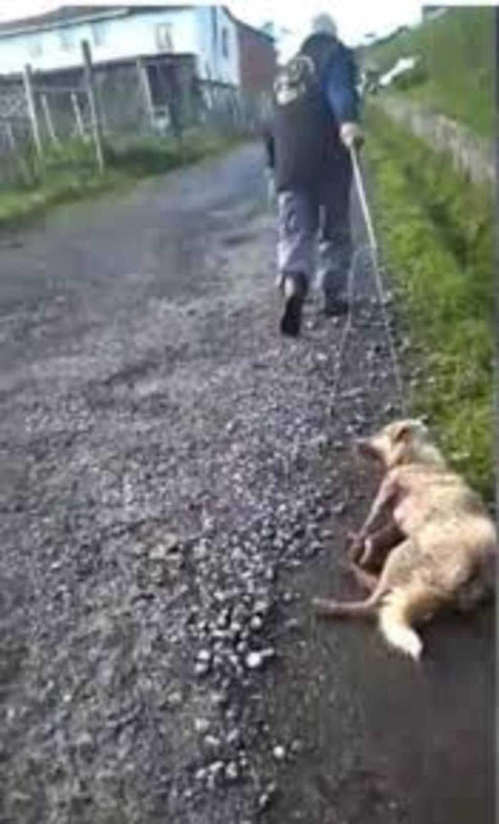 Muere la perra supuestamente tiroteada y apelada por su dueño en Chantada