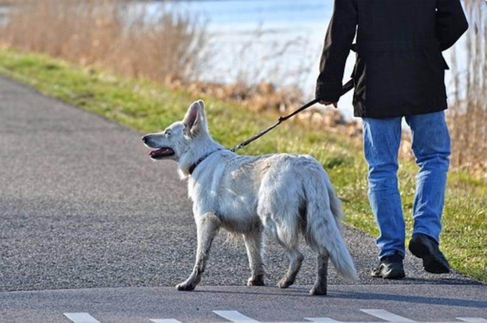 La imagen del esperpento: un varón se disfraza de perro en Toledo para saltarse el confinamiento