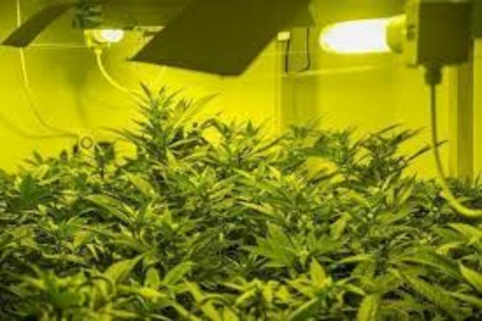 Marihuana en un piso