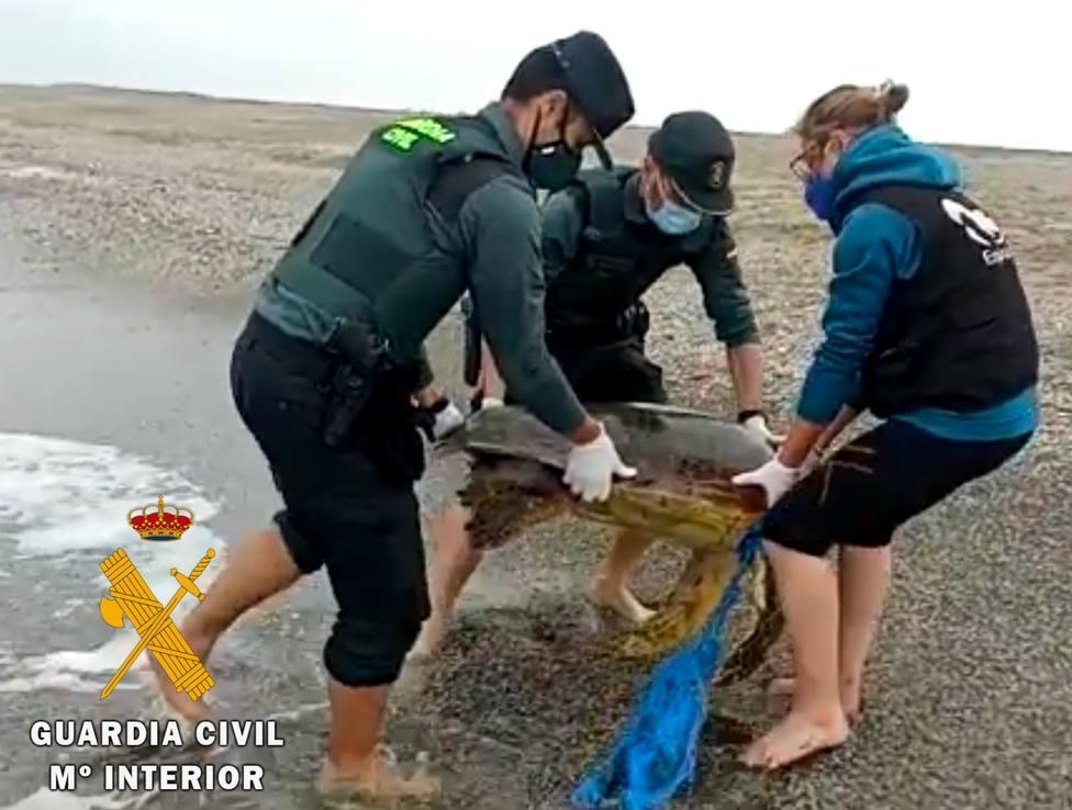 Localizan una tortuga boba varada y enredada en una red de pesca en Roquetas