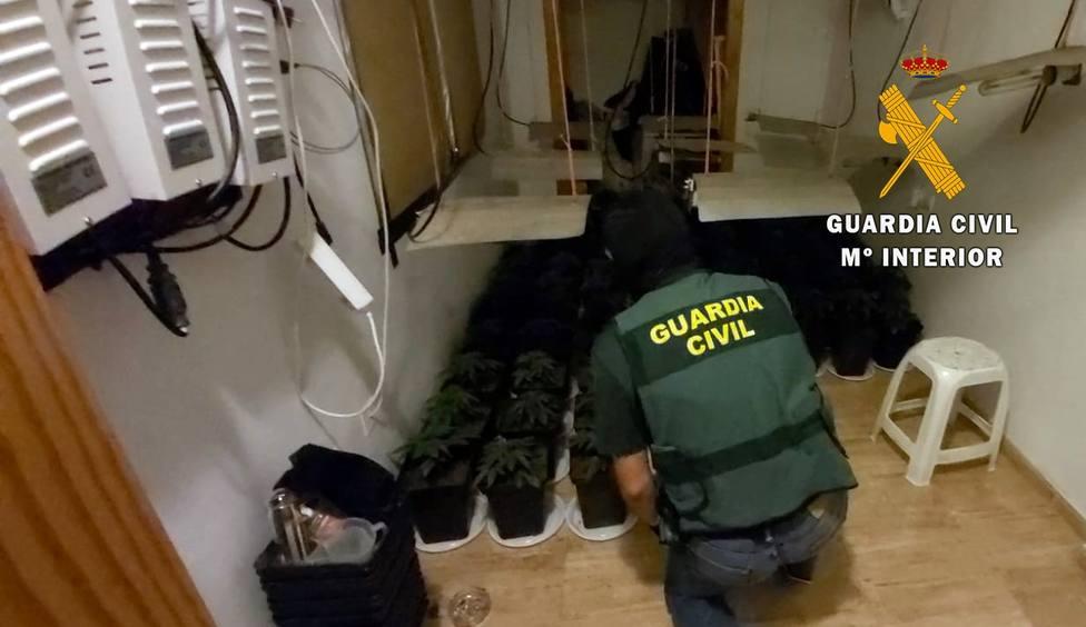 Intervienen 88 plantas de marihuana en una vivienda de Roquetas en la que habitan dos menores y una embarazada