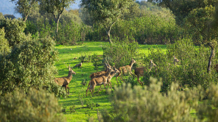 Safari en Extremadura