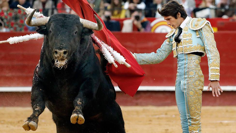 Inicio de faena de Castella a Horroroso, el toro de Jandilla al que se dio la vuelta al ruedo