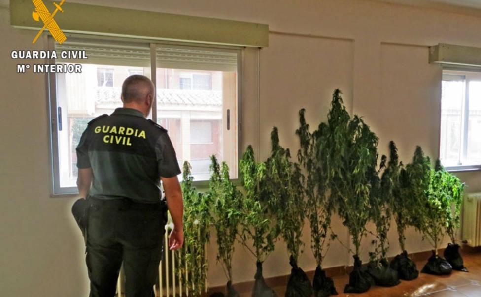Detienen a un hombre de 68 años por cultivo de marihuana en una localidad de Palencia
