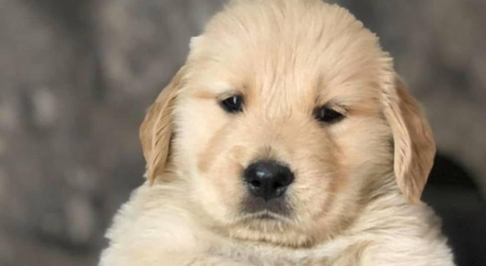 ctv-zdu-puppy