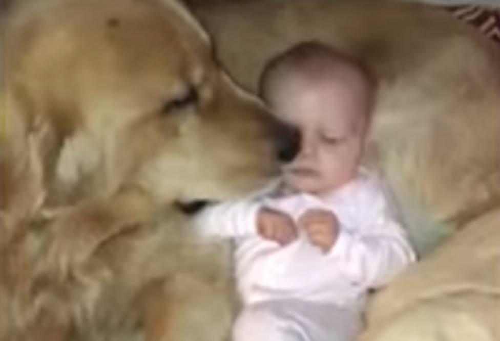 Un bebé confunde a un perro gigante con su almohada y lo que pasa entonces deja a todos boquiabiertos