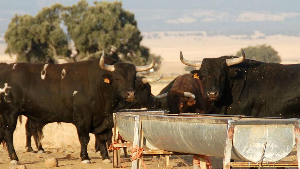 Los ganaderos de Castilla La Mancha solicitan ayudas económicas a la Junta