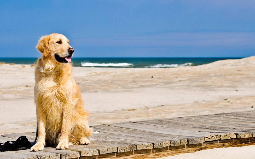 La playa canina está ubicada en El Pinar