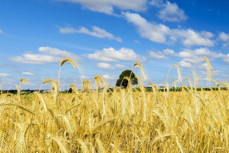 PAC. Agricultura. UAGA. ASAJA. Campo