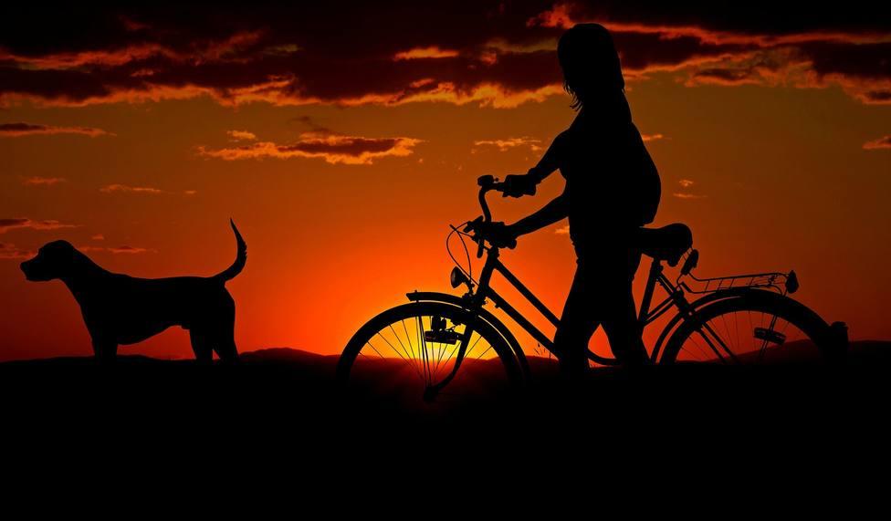 Foto 1 Dog Vivante