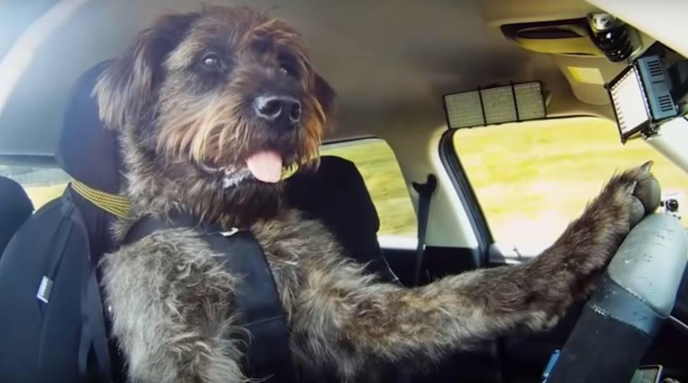 ctv-vgn-perro-conduciendo