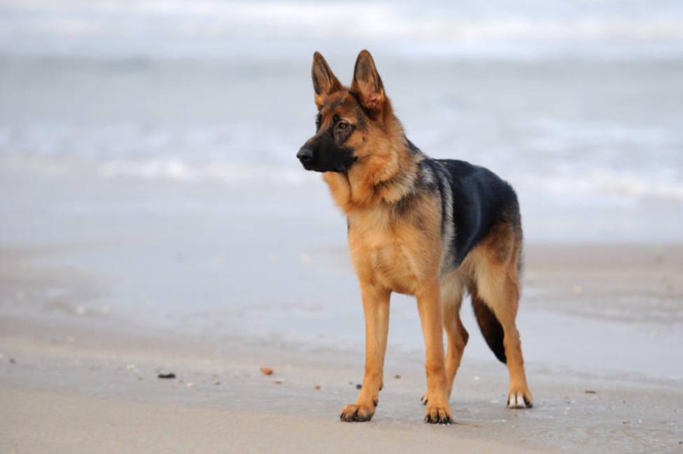 Fallece el primer perro con coronavirus en Estados Unidos
