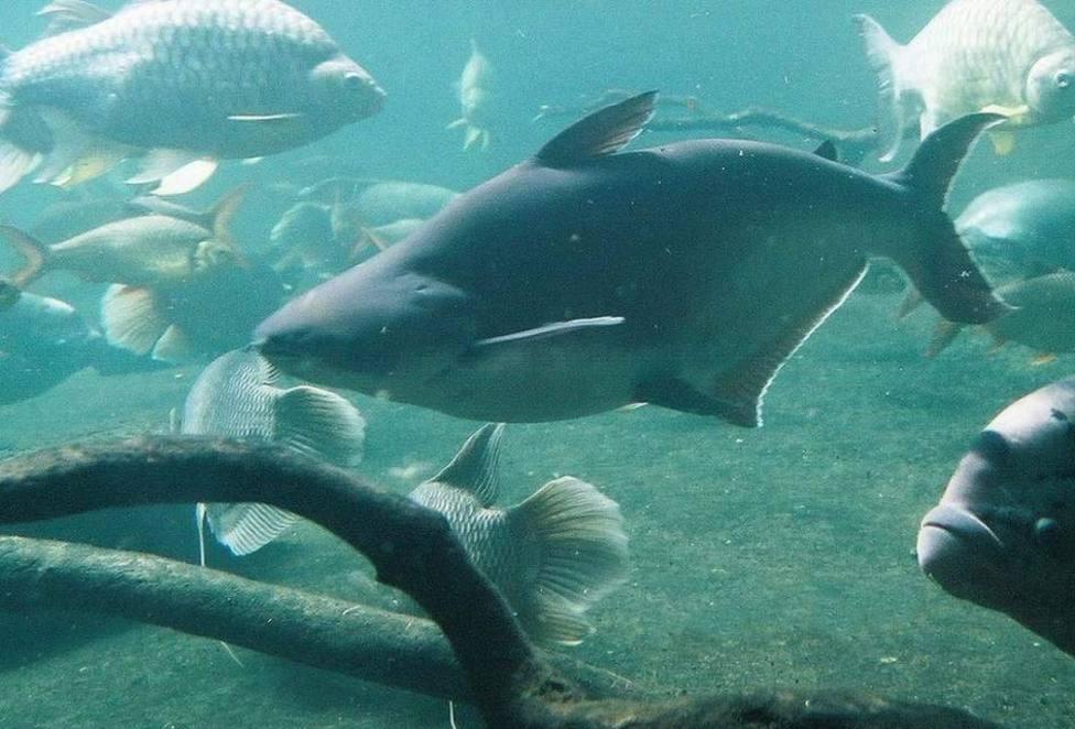 La Guardia Civil acusa de desobediencia al hombre que aplastó a un pez con su propio cuerpo en Almería